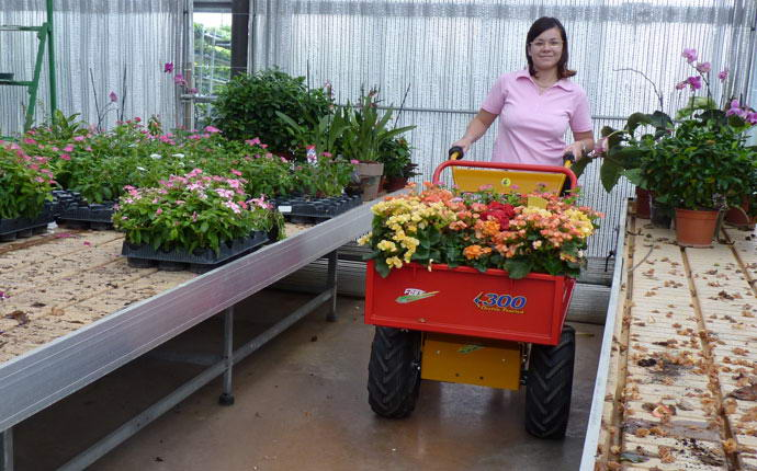 Electric transporter 600 W Fort, girl with a load of flowers, she moves easily in the greenhouse.