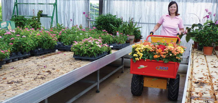 Greenhouse worker with electric transporter 300WS.